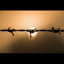 1280775 Barbed wire against morning