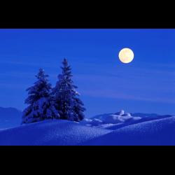 275648 Tannen Fichten im Winter Schnee Vollmond