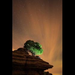 286286 Baum auf Felsformation