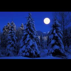 275647 Tannenwald Fichtenwald im Winter Schnee Vollmond