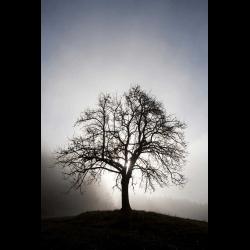 869520 Austria Mondsee fruit tree