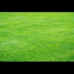 1291779 Meadow