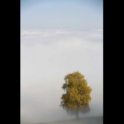 455824 Hochnebel mit Baum im